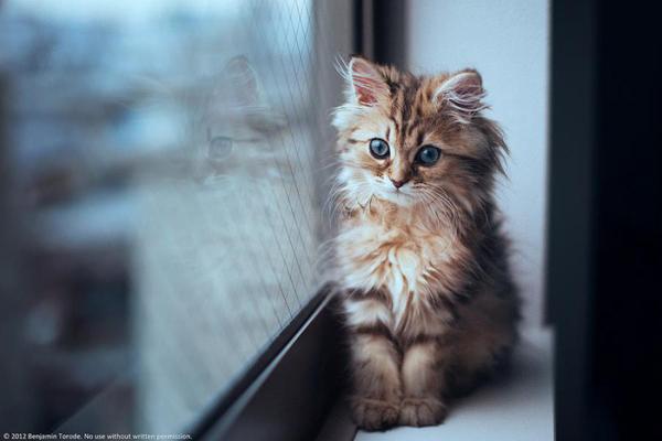 Восьмиклассница упала из окна, пытаясь спасти котенка