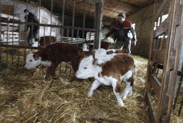 Россияне соблазняются фермерством из-за грантов