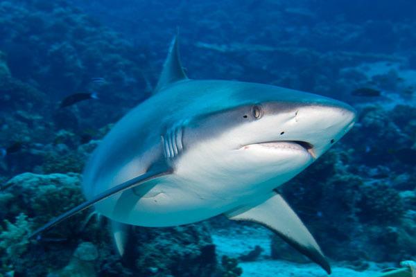 В CША двое подростков лишились конечностей при нападении акул