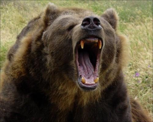 Маленькую девочку разорвал медведь