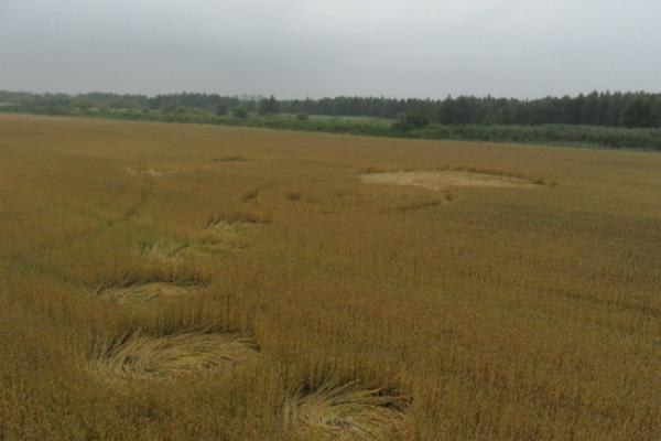 На поле в Адыгее появились загадочные круги