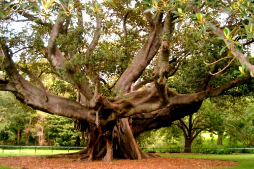 Деревья станут опасными и приведут человечество к катастрофе, – ученые