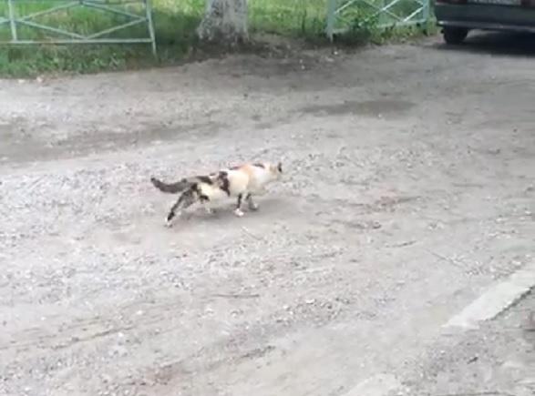 В Пятигорске дети-живодеры забили кошку кирпичом