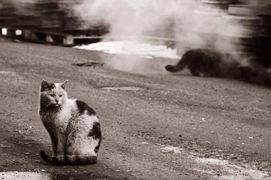 В Австралии убьют 2 миллиона кошек из-за угрозы редким животным