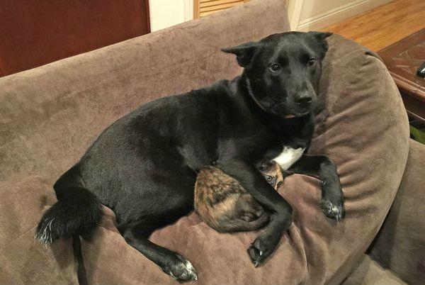 Собака, защищающая котенка от грома, умилила Интернет
