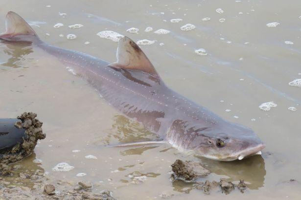 Стая акул в небольшом водоеме шокировала англичан