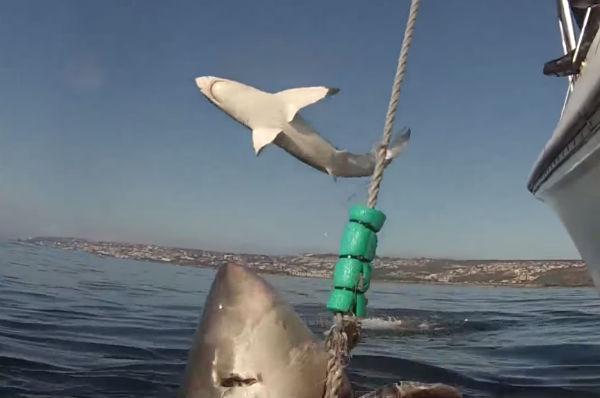 Видео летающей акулы