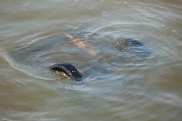 Москвичи на джипе проломили ограждение и улетели в реку
