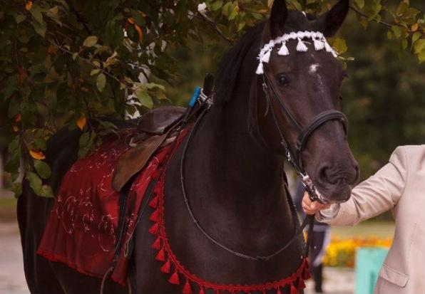 Перепуганная лошадь снесла хозяйку и пятерых детей