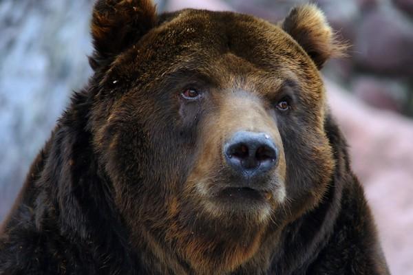 Медведь откусил руку пьяной посетительнице в томской шашлычной