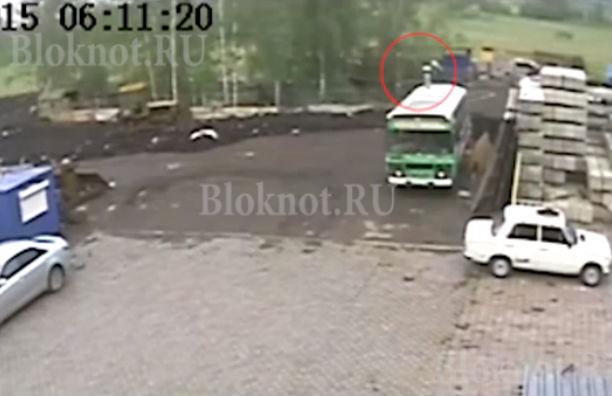 Камера зафиксировала, как медведь откусил руку девушке