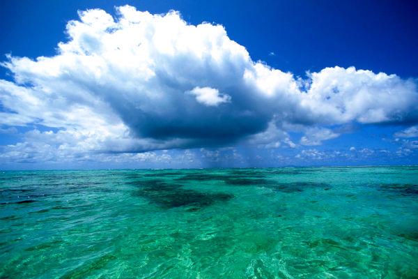 Планктон в океанах помогает