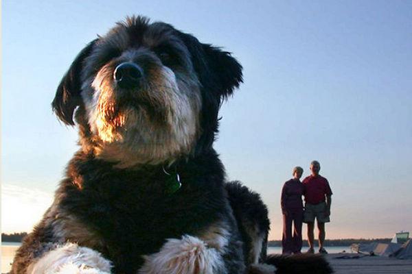 Фотографии собак-гигантов стали новой