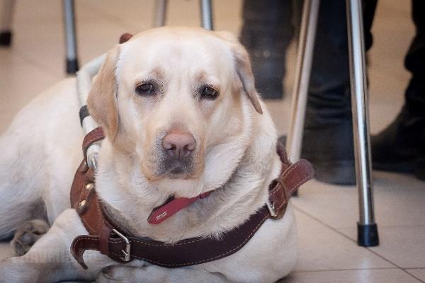 СК пообещал: если похищенная собака-поводырь не найдется, он даст слепой певице другую