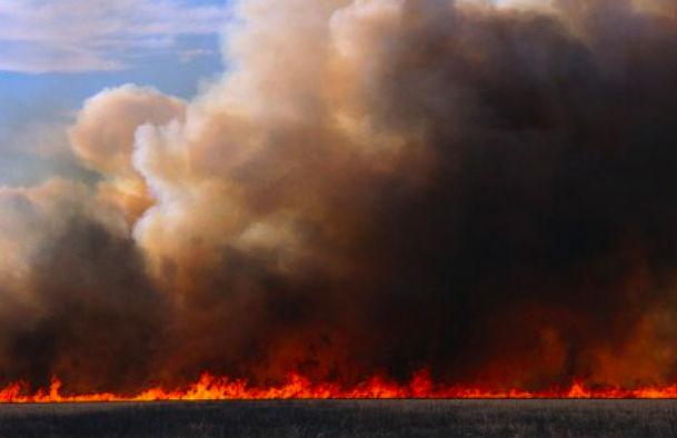 Из-за обстрелов в Донецкой области загорелось 100 га пшеницы