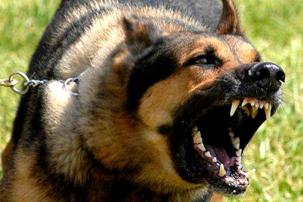 В Южно-Сахалинске собака прокусила шею маленькой девочке