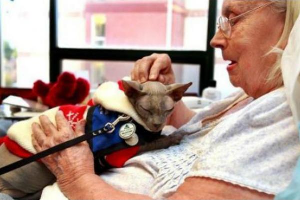 Ученые подтвердили способность пяти животных лечить людей