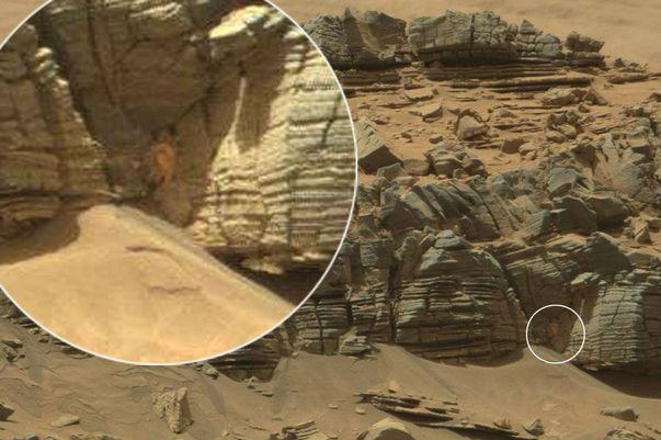 Пользователи Интернета нашли на Марсе краба