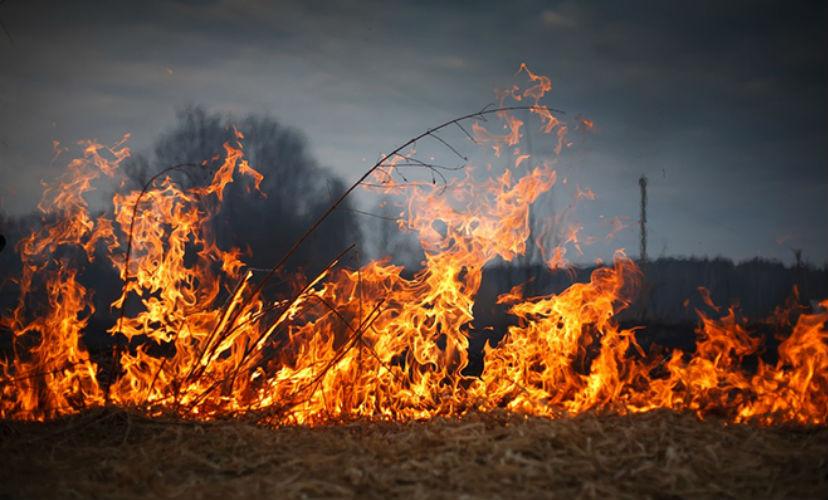 Названы причины распространения крупных лесных пожаров в России