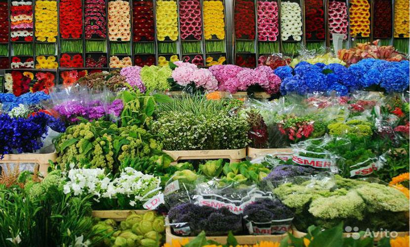 Голландия цепляется за российский цветочный рынок