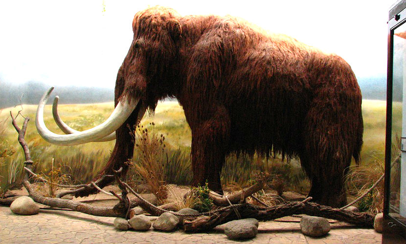 Ученые из Якутии научились клонировать вымерших мамонтов