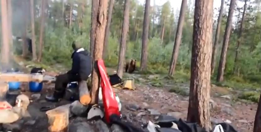 Туристы прогнали медведя