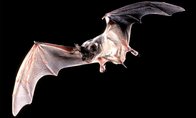 Календарь: 20 сентября - Ночь летучих мышей