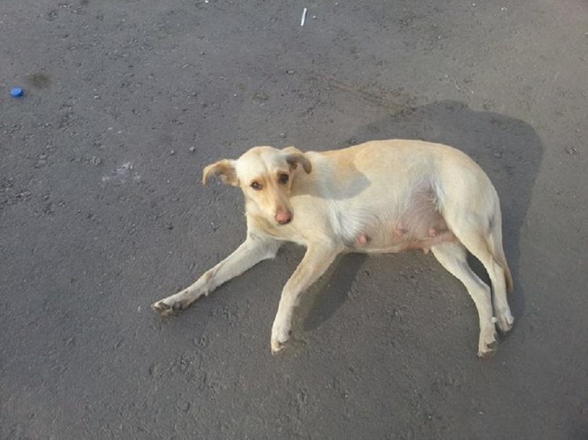 В Воронеже рабочие заживо замуровали в яме беременную собаку