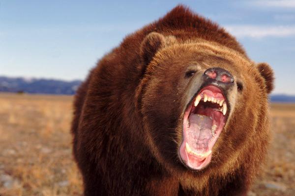 Школьникам запретили гулять из-за нашествия медведей в Приморском крае