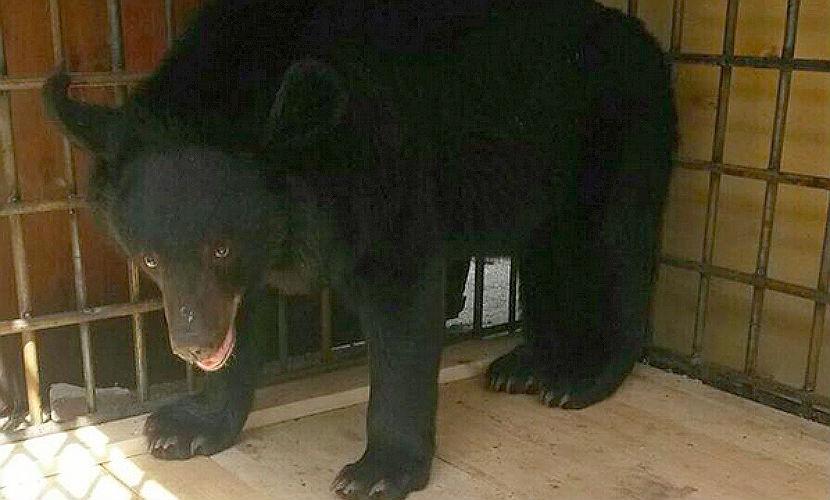 Спасенных в Уссурийске зверей поселят в муниципальном зоопарке