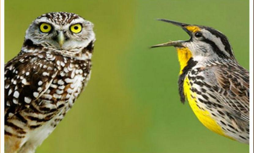 Ученые доказали, что люди-совы лучше жаворонков
