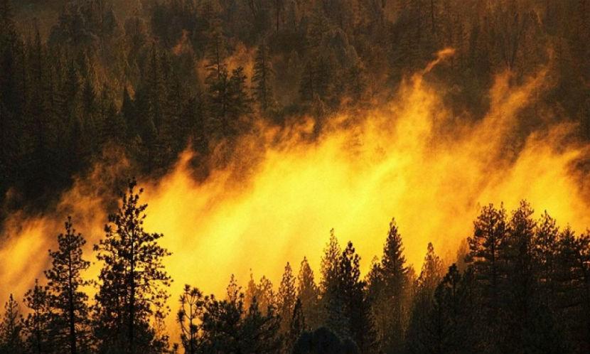 Крупный пожар охватил национальный парк в Грузии