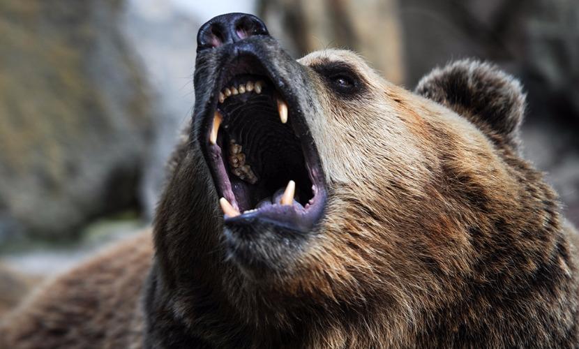 Медведь покусал беременную девушку в Приморье