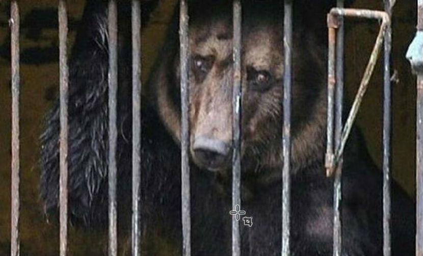 Умерла медведица, эвакуированная из затопленного зоопарка в Уссурийске