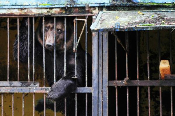 В Уссурийске возобновлена операция по эвакуации животных из затопленного зоопарка