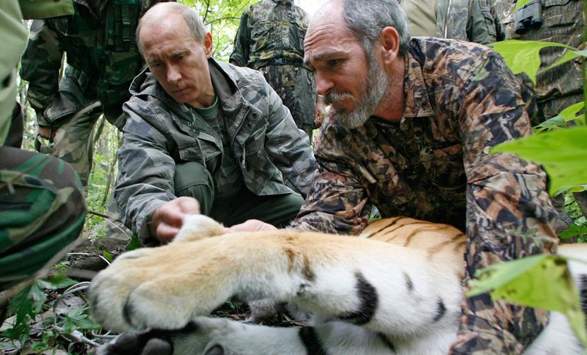 Владимир Путин поздравил граждан РФ с Днем тигра - «хозяина тайги»