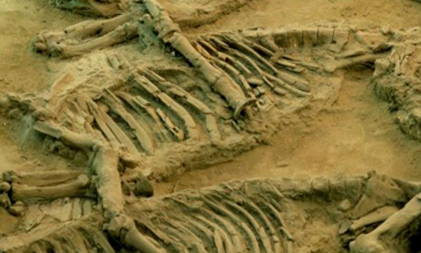 Ученые обнаружили древнейшие в мире останки скелетных животных в Якутии
