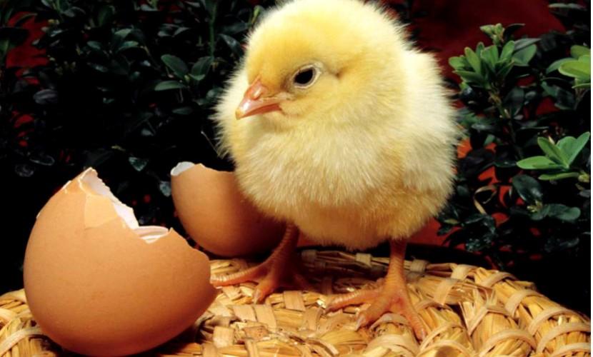 Календарь: 9 октября - Всемирный день яйца