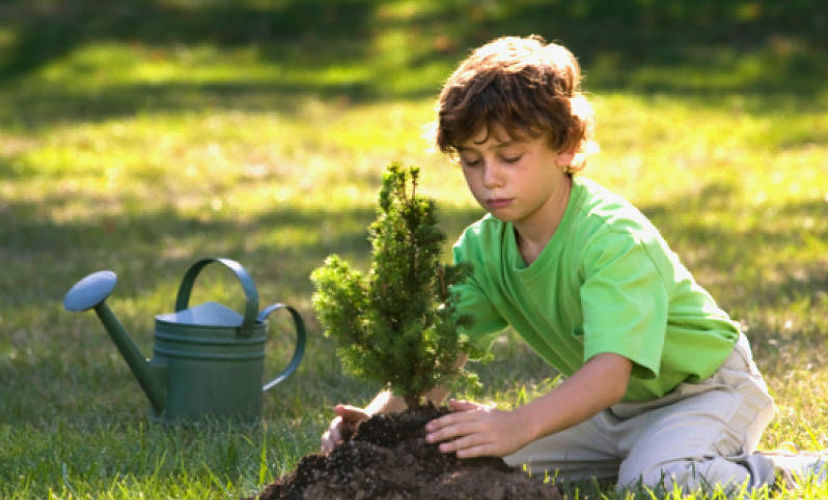 Россиян призвали сажать елки во дворах для Нового года