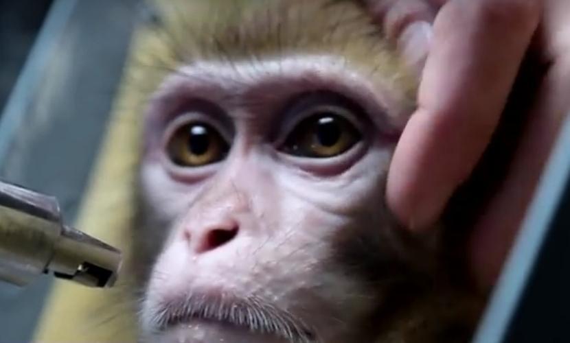 Сформирована команда талантливых обезьян из России для полета на Марс