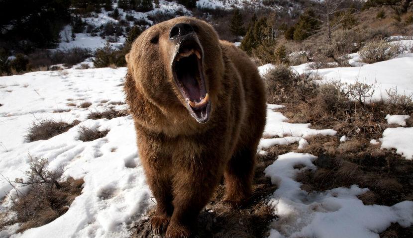 Медведь растерзал охотника в хабаровском лесу