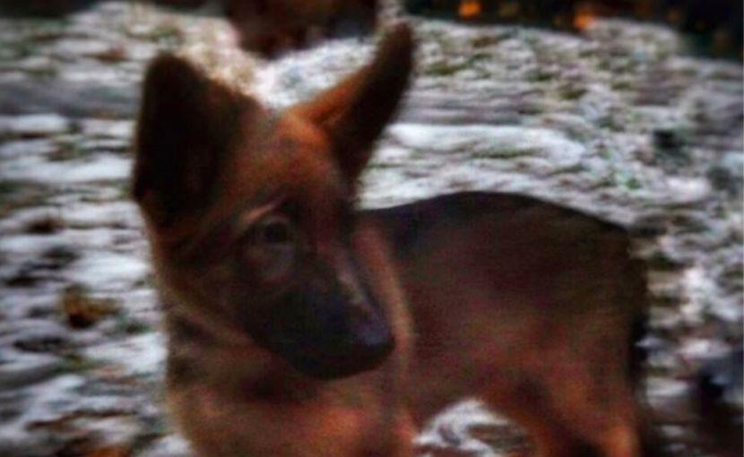 МВД России подарило французским спецслужбам щенка Добрыню