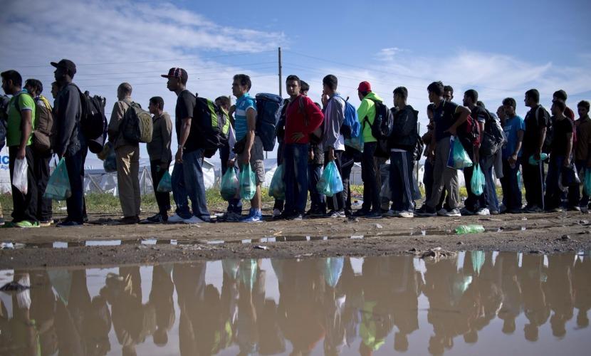 Финские власти придумали поселить беженцев-мусульман в центре свиноводства