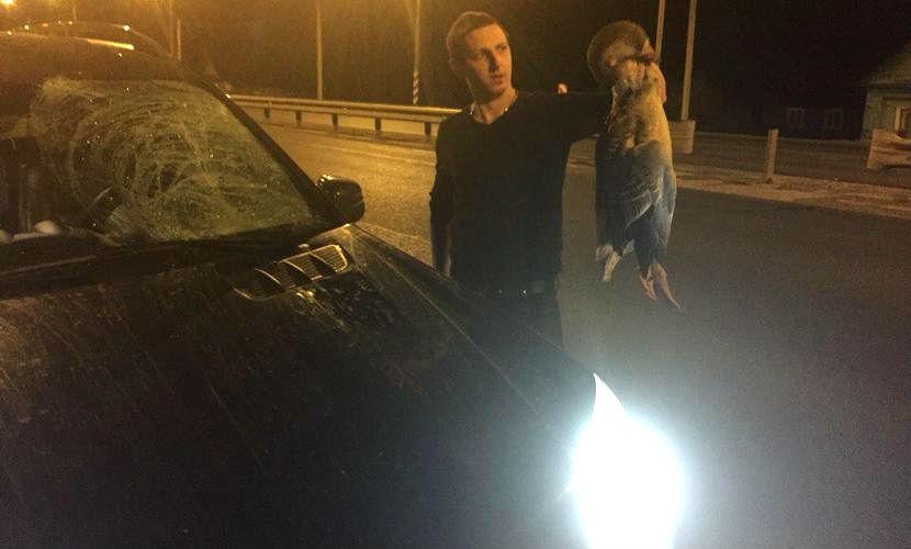 Летящего на Москву гуся насмерть сбил Mercedes