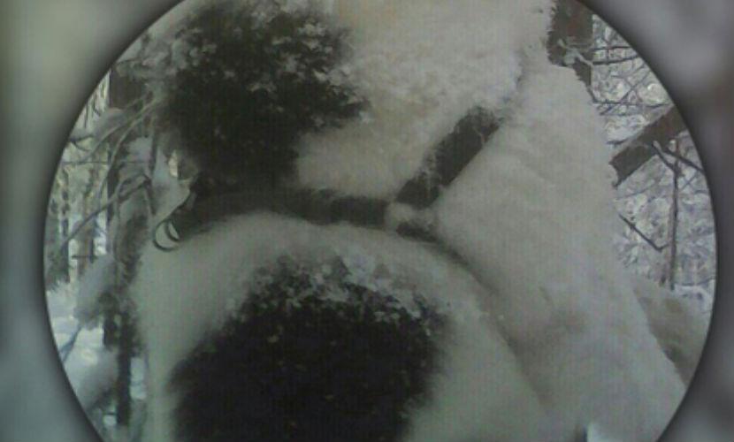 Живодеры повесили пса в детском парке Ноябрьска