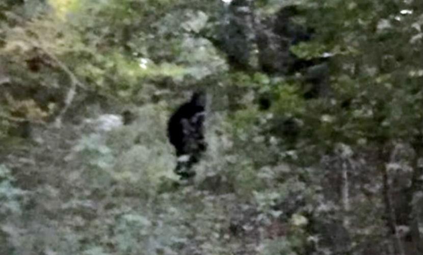 Снежного человека поймали на камеру в лесу Англии