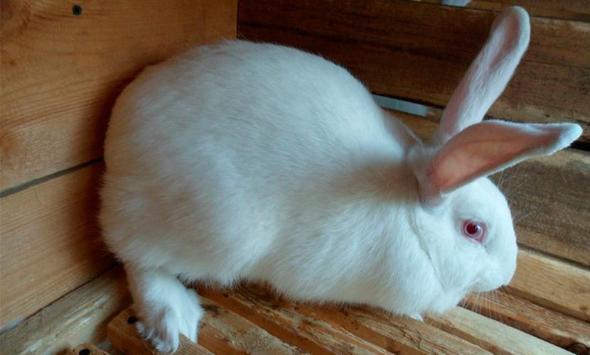 Новорожденной девочке домашний кролик отгрыз нос