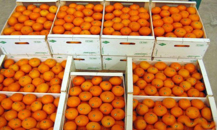 В Турции вдвое рухнули цены на помидоры и цитрусовые