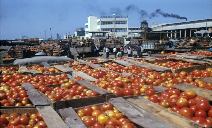 Турецкие помидоры попадают на российский рынок, став