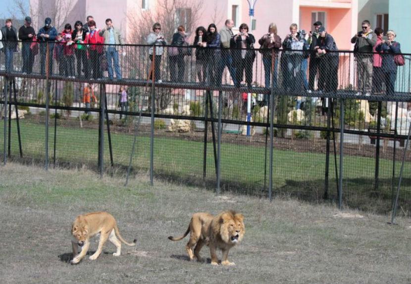 Спасательную операцию для замерзающих обитателей крымского зоопарка провело МЧС России